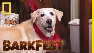 Scavenger Lab | BarkFest