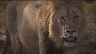Lion World Travel Presents A Day on Safari in South Africa