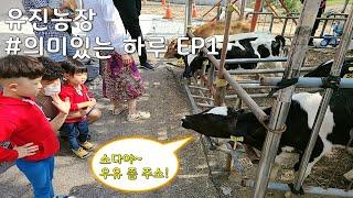 [소다네] 유진농장(송아지 우유주기 체험) / 의미있는…