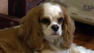 O'fallontv: Harper's Doggie Day Care | O'fallon, Missouri