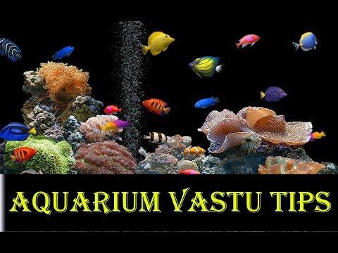 Aquarium Vastu Tips In Hindi,aquarium Vastu Position In Home,