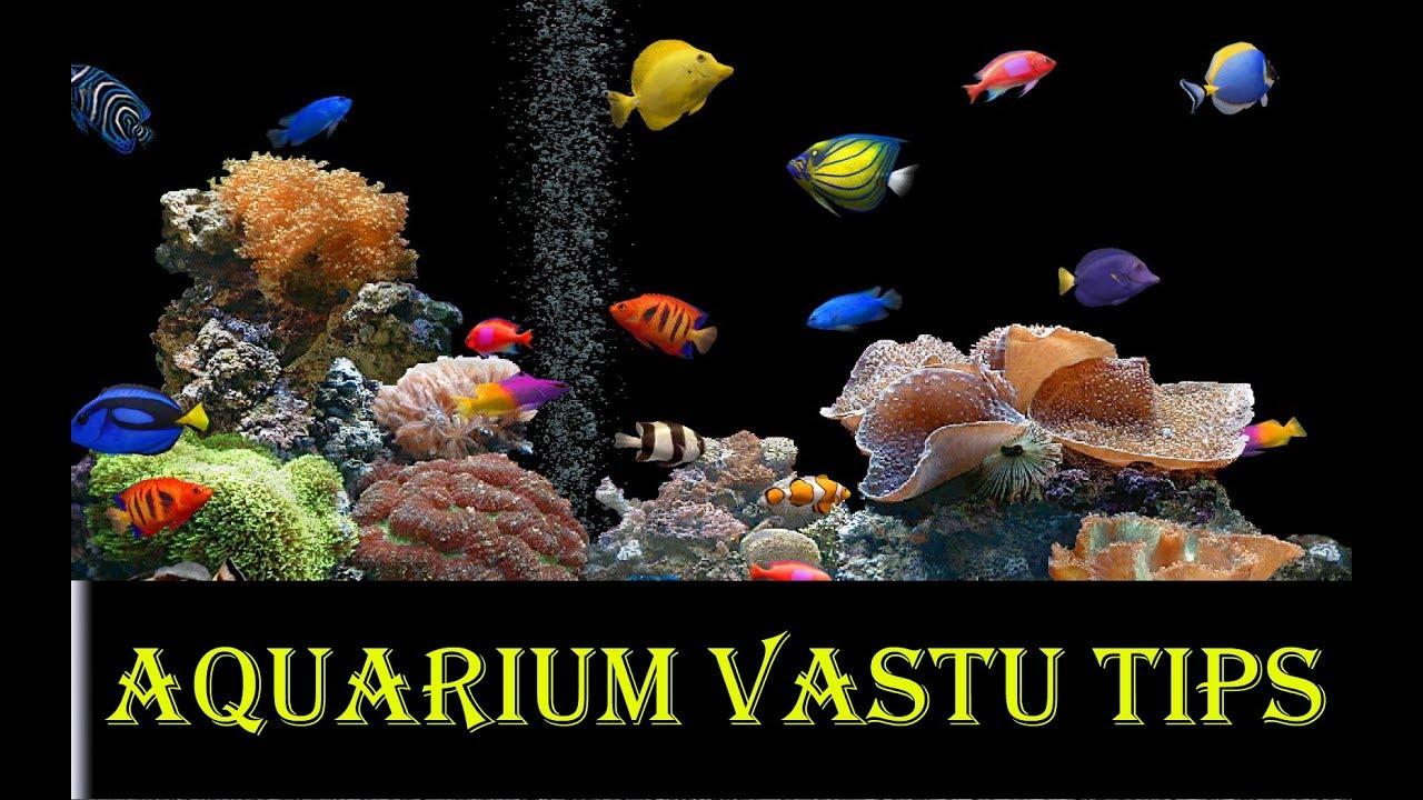Aquarium Vastu Tips In Hindi Aquarium Vastu Position In Home Youtube