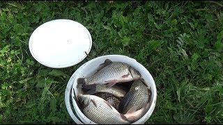 Моя осенняя рыбалка на Косе в городе Днепр. My autumn fishing on the Spit in the city of Dnipro