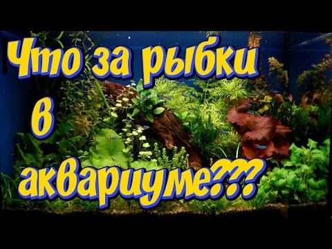 Мой аквариум! Какие аквариумные рыбки содержатся  у меня в аквариуме!