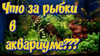 Мой аквариум! Какие аквариумные рыбки содержатся  у меня в аквариуме!(Это мое первое видео в котором я спрашиваю у Вас мои Уважаемые зрители, какие аквариумные рыбки содержаться..., 2017-02-16T15:50:25.000Z)