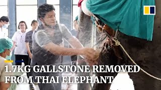 Veterinarians extract 1.7kg gallstone from elephant in Thailand