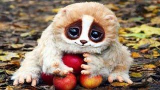 10 मासूम  दिखने वाले जानवर जो ले सकते हैं आपकी जान