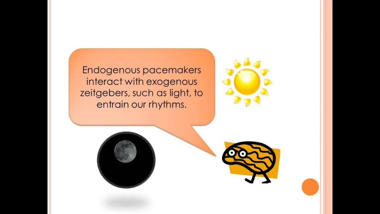 endogenous pacemakers exogenous zeitgebers essay 07 using your knowledge of endogenous pacemakers and exogenous zeitgebers, explain knowledge of the role of endogenous pacemakers and exogenous zeitgebers.