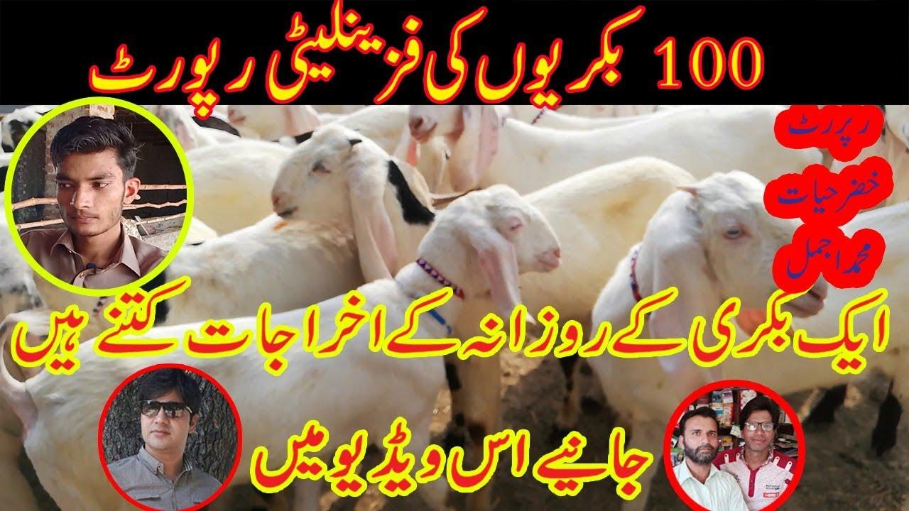 100 Goat Farm Feasibility Report Goat Farming in Pakistan Goat Farm  Business Plan