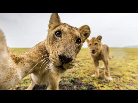 Africa on Safari  - Full Interview with Kym Illman