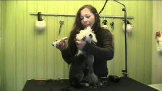 CHINESE CRESTED PUPPIE GETTING GROOMED