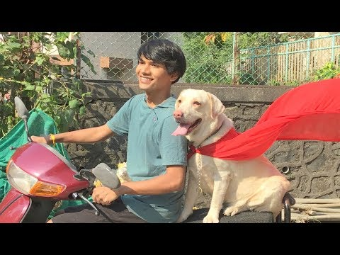 DOG SHORT FILM | HERO POCKET | DIWALI SPECIAL | LABRADOR RETRIEVER || MOHAK MEET || SEEMA