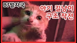 길고양이 구조하다.. 아기고양이가 울고 있었어요..