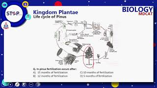 Kingdom Plantae 2nd Half Up to From Evolution of Seed habit to end