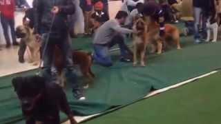 Dog Show - Ambala - 2015