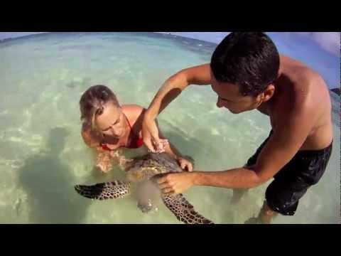 Saving Endangered Sea Turtle from Entangled Fishing Line - Hawaii 11.15.11