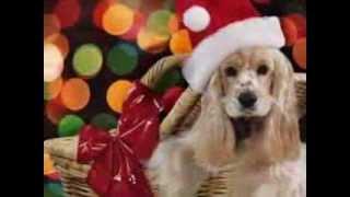 ROCKIN AROUND CHRISTMAS TREE Sunshine Christmas Shine! with Brenda Cole