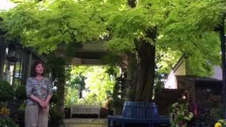 ガーデンの様子(2016年7月31日) 「黄金アカシアとブッドレア」