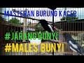 Pancingan Kacer Gacor Rapat Dijamin Kacer Malas Bunyi Dan Susah Emosi Bakalan Gacor Dan Tarung  Mp3 - Mp4 Download