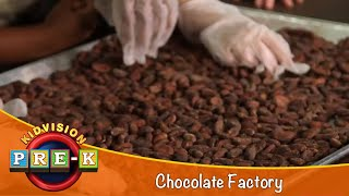 How Chocolate is Made | Chocolate Factory Field Trip | KidVision Pre-K