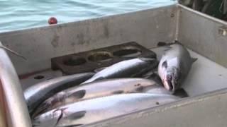 Pesca com linha (Trolling)