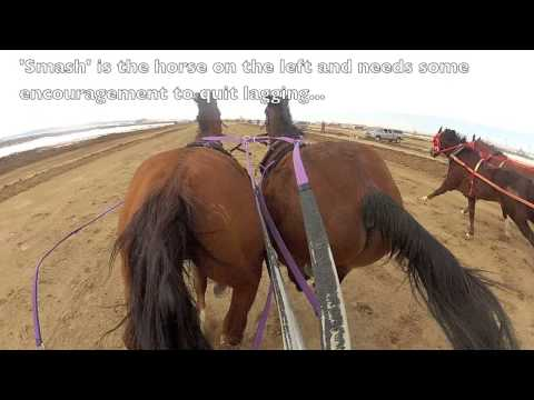 Saratoga, Wyoming Chariot Races 2013