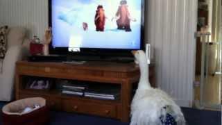 PET GOOSE WATCHING CARTOONS ON TV