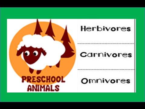Herbivore Carnivore Omnivore Animals Youtube