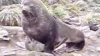 Seal Sex
