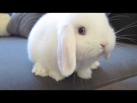 dramatic bunny vacuum youtube
