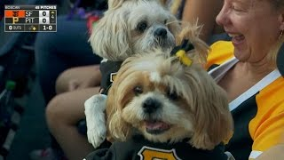 SF@PIT: Pup Night at PNC showcases the cutest dogs