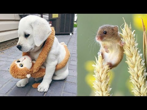 Cute baby animals Videos Compilation cute moment of the animals - Cutest Animals #5