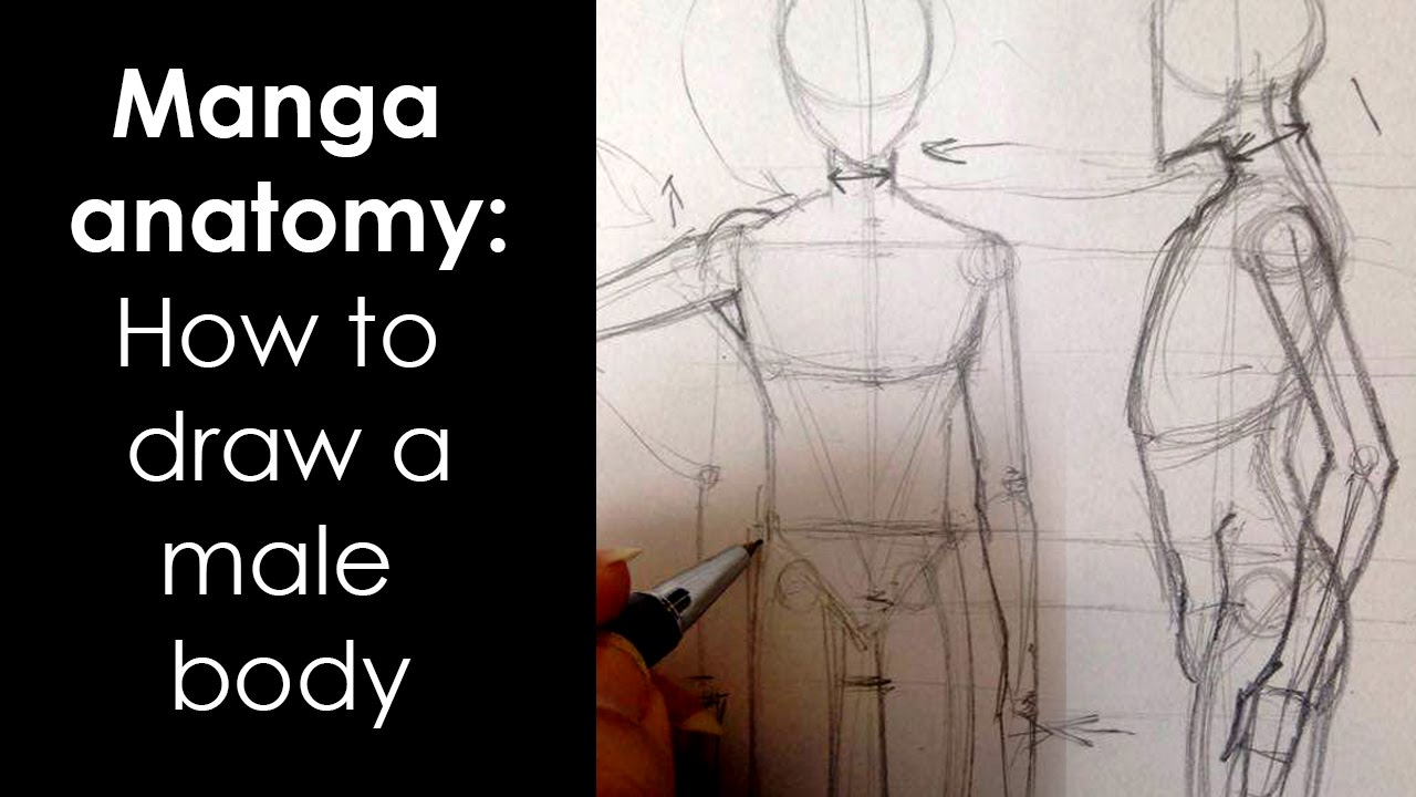 Manga anatomy : How To Draw Male Body FULL LESSON - YouTube