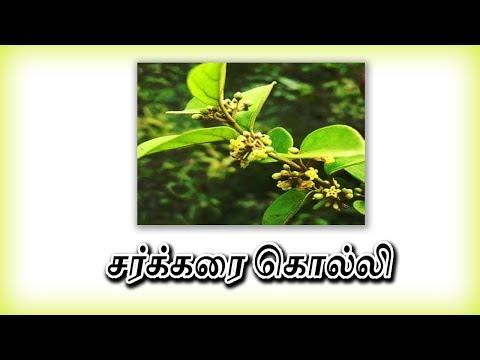 சர்க்கரை நோய் - Diabetes treatment In Tamil -siththarkal Ulagam-siddharkal