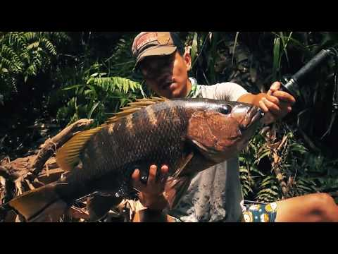 World's Hottest Pepper And Bass Fishing  - Papuan Black Bass Fishing