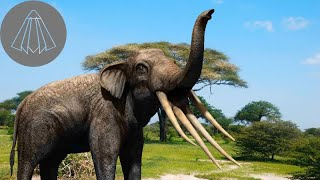What Happened to the Four Tusked Elephants?