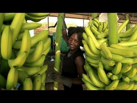Le business des chips de banane au Kenya