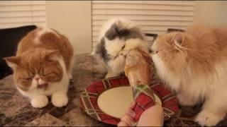 Cats Nom Turkey Drumstick