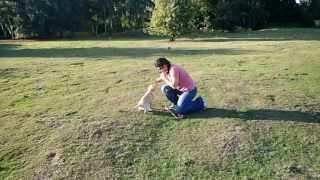 Gun Dog Labrador Puppy Training Week 1 (the Sit, The Retrieve, The Down)