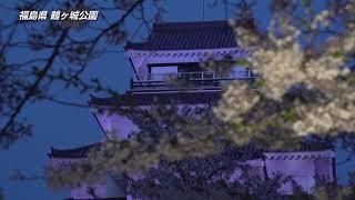【日本の桜】福島県  鶴ヶ城公園の桜