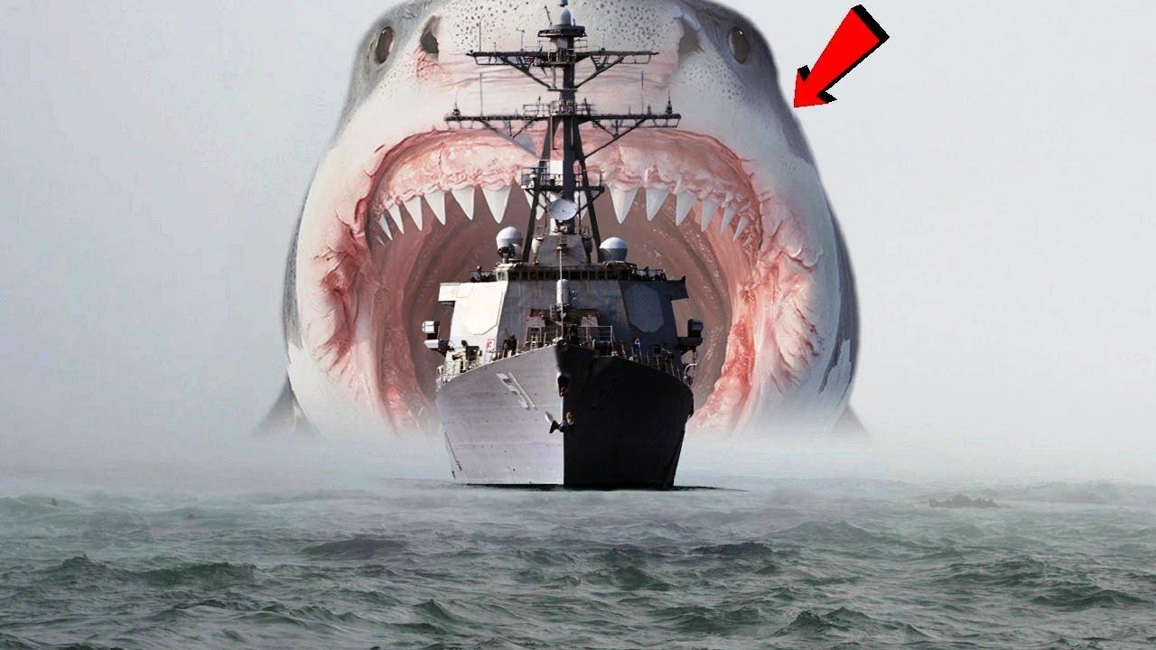 इतिहास का सबसे खतरनाक शार्क हमला, जिसने हजारो लोगो को मार डाला Worst Shark Attacks Ever Recorded