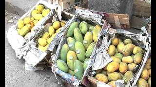 "Mango "" KING OF FRUITS "" 2010 Addiel Sabir.flv"