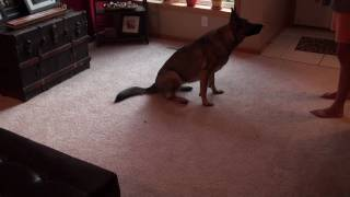 Teaching A Dog To Sit Using Clicker Training: Part 3