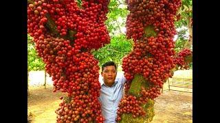 Ghé thủ phủ cây đỏ ở cao nguyên Vân Hoà - Khám phá vùng quê