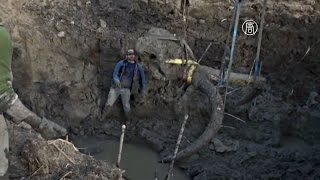 Американский фермер нашёл на своём поле скелет мамонта (новости)