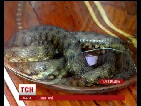 На Тернопільщині змія