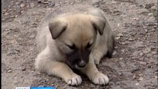 В Красноярске ввели ограничения на деятельность организации по отлову бездомных животных