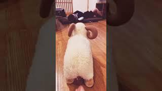hidupku sebagai domba