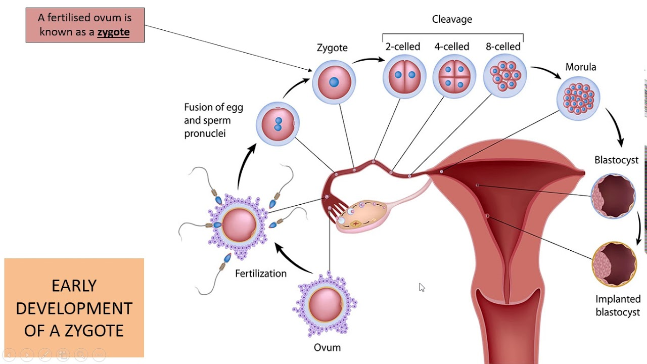 Male Fertility Is Important Yet People Think It's A Woman's Issue