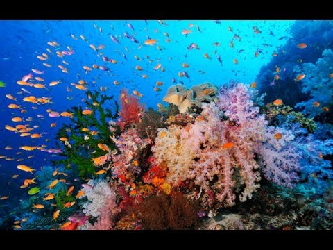 Top 15 Most Beautiful Coral Reefs In The World And Amazing ... 10 Most Beautiful Coral Reefs World